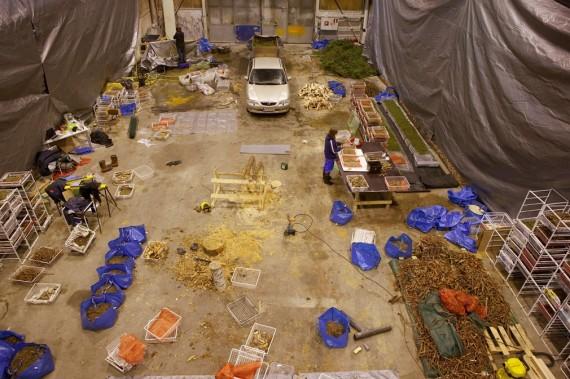 Antti Laitinen, 'Forest square' (2013), work in progress.