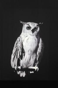 Ann Lislegaard, Oracles, Owls – Some Animals Never Sleep, 2012-2013. Videostill. Courtesy of the artist and Lyon Biennial.